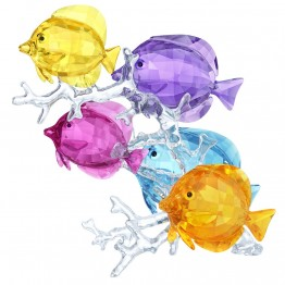Swarovski Rainbow Fish Family